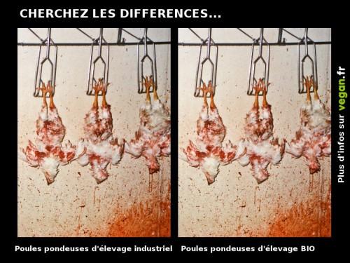 cherchez_les_differences_poules.jpg