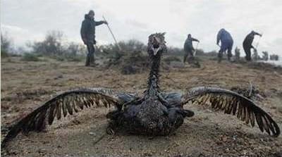 poor bird 2.jpg