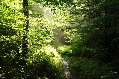 Sun-trail-forest-trees_-_West_Virginia_-_ForestWander.jpg
