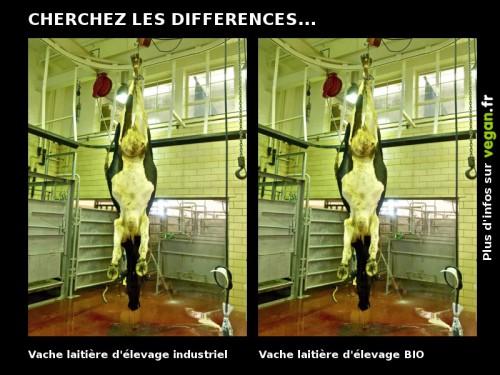 cherchez_les_differences_vache.jpg