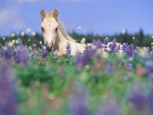 Horse in flowers.jpg