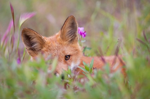 Animal dans la Nature.jpg