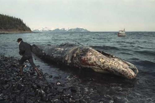 les-images-de-la-maree-noire-causee.jpg