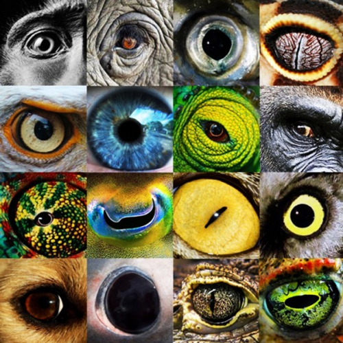 how-animals-see-the-world-animal-eyes.jpg