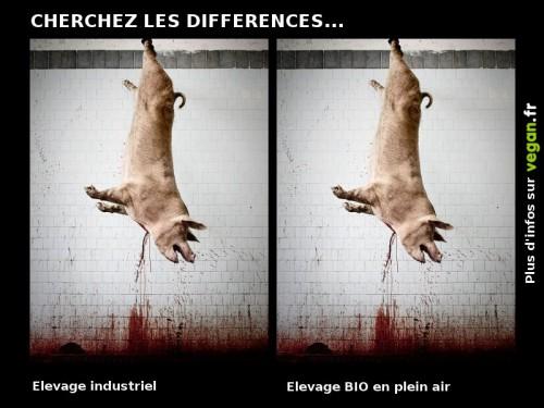 cherchez_les_differences_cochon.jpg